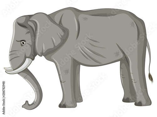 Skinny elephant on white background