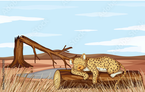 Deforestation scene with cheetah dying