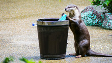 Otters Hold Plastic Waste  Dumped Into Wooden Bins.