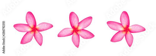 Keuken foto achterwand Frangipani frangipani flowers isolated on white background