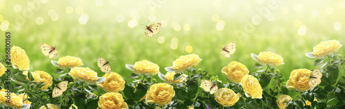 Fond de hotte en verre imprimé Fleur Summer bright background with many yellow fluttering butterflies and blooming fantasy yellow roses flowers blossom and glowing sparkle bokeh