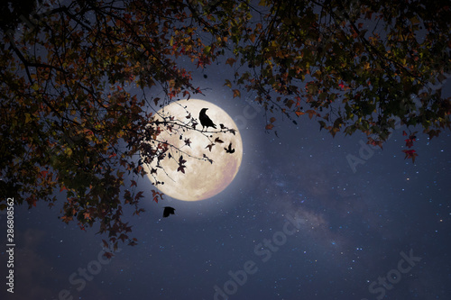 Fotografía Beautiful autumn fantasy - maple tree in fall season and full moon with star