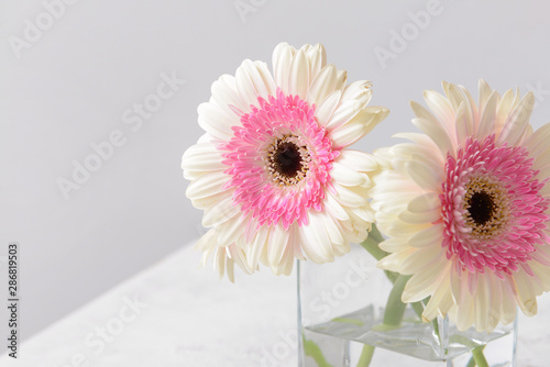 Obraz na plátne Vase with beautiful gerbera flowers on table