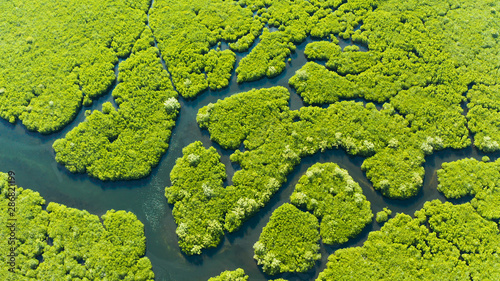 Foto auf AluDibond Pistazie Mangrove trees in the water on a tropical island. An ecosystem in the Philippines, a mangrove forest.