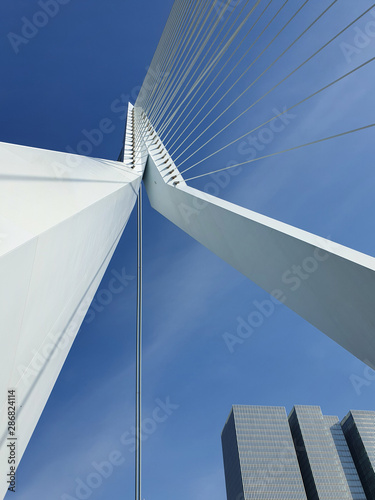 Foto auf AluDibond Schwan Erasmus bridge over Meuse river in Rotterdam, the Netherlands. Abstract architecture details over blue sky background. Erasmusbrug called the swan, 284m long, designed by Ben van Berkel.