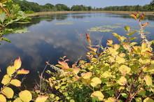 Salt Marsh Pond
