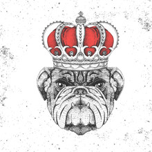 Hipster Animal Bulldog In Crown. Hand Drawing Muzzle Of Animal Dog
