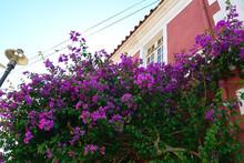 花のある家 バルパラ...