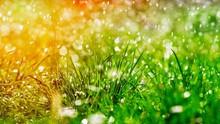 Green Grass Under Water Drops Sun Day Light Close