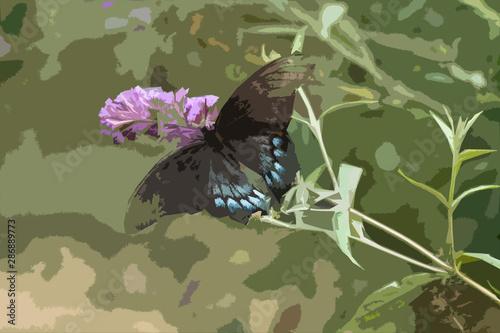 Butterfly on Butterfly Bush Illustration