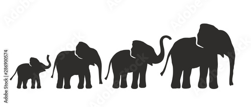 Cuadros en Lienzo  Set of Different Elephant Silhouettes. Vector