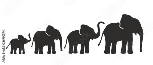 Pinturas sobre lienzo  Set of Different Elephant Silhouettes. Vector