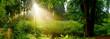 canvas print picture Lichtung im nebligen Wald mit Sonne, die durch Bäume scheint