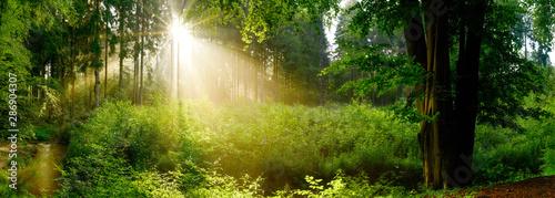 Polana w mglistym lesie ze słońcem świecącym przez drzewa