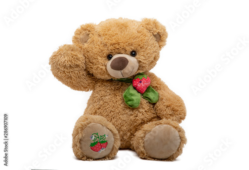 Tender teddy bear