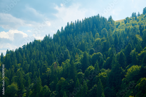 Photo Stands Green blue Beautiful summer landscape - spruces on hills, cloudy sky at bright sunny day. Carpathian mountains. Ukraine. Europe. Travel background.