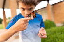 Monarch Butterfly Resting On Boy's Finger