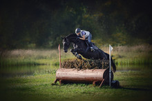Portrait Of Black Horse With W...