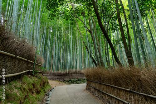[京都府]嵐山の竹林