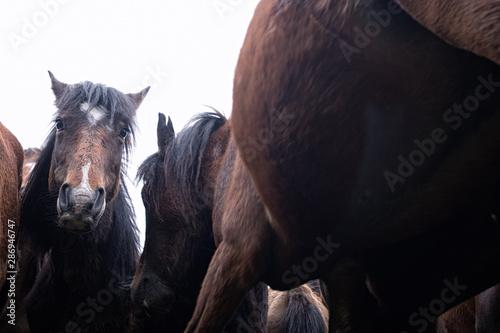 Fotografía  caballos