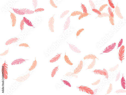 Fotografie, Obraz  Flying feather elements airy vector design.