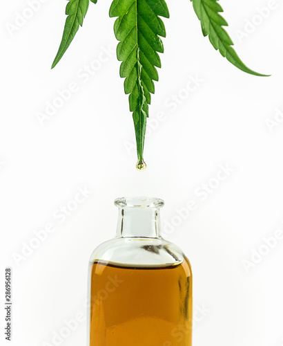 Fototapeta Close up of Green Cannabis, ganja leaf with CBD oil drop in to the bottle obraz