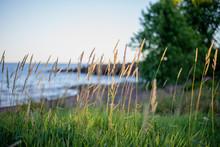 Tall Grass Along Lake Superior In Minnesota