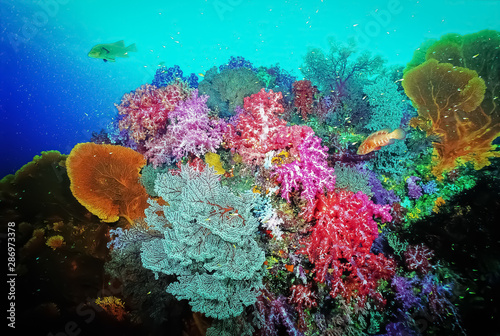 Foto op Plexiglas Koraalriffen Colourful collection of soft corals with seafans. It is mixed of red, pink, blue, purple soft corals with red white seafan and yellow seafan. Photo: East of Eden, Similan Island, Thailand.