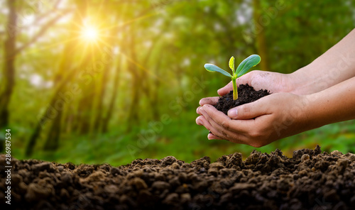 environment Earth Day In the hands of trees growing seedlings Wallpaper Mural