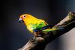 canvas print picture - Vögel in der Natur