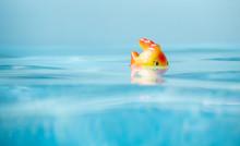Cute Toy Fish Taking Bath In Swimming Pool