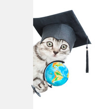 Surprised Cat With Black Graduation Cap Holding Globe Behind Empty White Board. Isolated On White Background