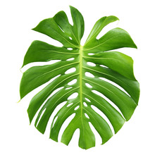 Isolated Green Swiss Chart Pla...
