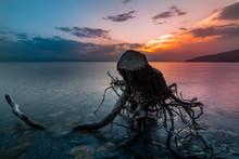 Old Stump In The Lake After Beautiful Sunset. Long Exposure. Sevan Lake Armenia.