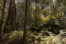 Forests Of Jurassic Or Prehist...