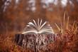 Leinwanddruck Bild - An open book lies on a stump in the autumn forest. Autumn leafing through pages