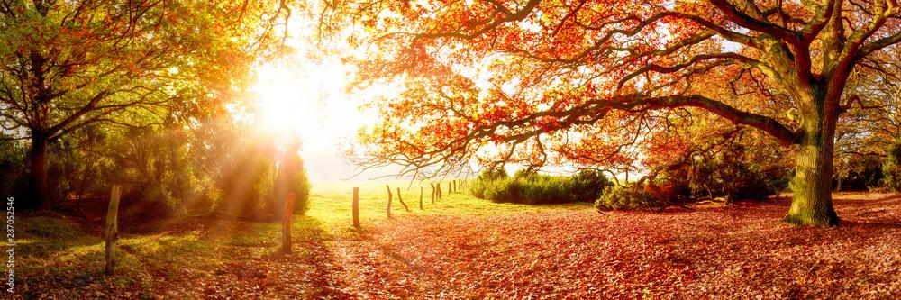 Fototapeta Landschaft im Herbst mit Wald und Wiese bei strahlendem Sonnenschein