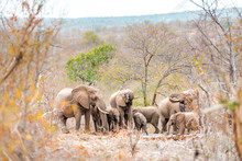 Elephant Family With Young Ani...