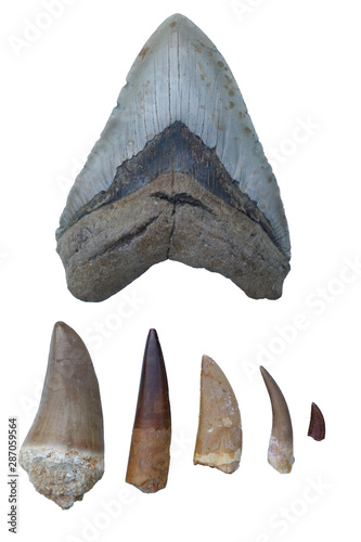 Photo  Dinosaur Fossils - Megalodon Tooth, Mosasaurus Tooth, Spinosaurus Tooth, Tyranno