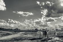 Cavalos Na Beira Da Estrada