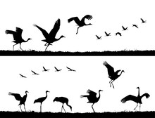 Common Cranes Take Off And Dance In The Field. Vector Silhouettes Set