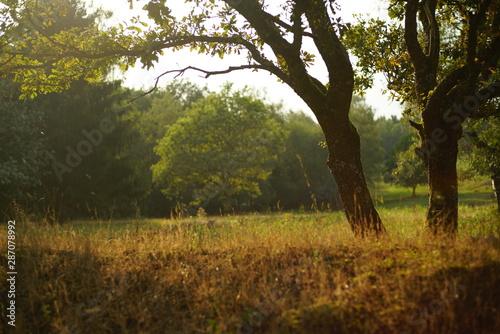 Türaufkleber Darknightsky Sunset at the countryside