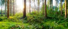 Sonnenaufgang In Einem Nebligen Wald Mit Dicht Bewachsenem Waldboden
