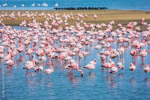 Foto op Aluminium Flamingo Blue water