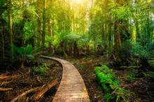 Beautiful Path In Lush Tropica...