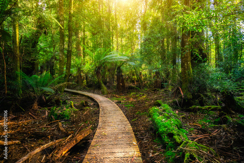 Photo Stands Black Beautiful path in lush tropical rainforest jungle in Tasman peninsula, Tasmania, Australia. The ancient jurassic age jungle is part of three capes track, famous bush walking of Tasmania, Australia.