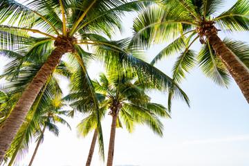 Fototapeta Do sypialni Tropical beach with coconut palm trees at pattaya thailand