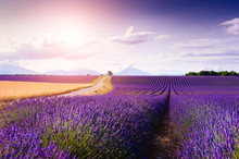 Lavender Fields At Sunset Near...