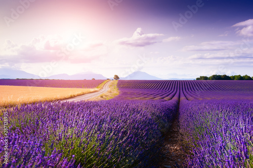 Lavender fields at sunset near Valensole, Provence, France. Summer landscape with blooming lavender flowers
