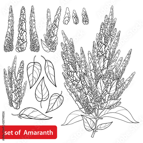 Photo Set with outline Amaranthus or Amaranth flower bunch and leaf in black isolated on white background